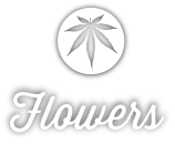 Shop for Seattle's best pot, marijuana & cannabis flowers at Cannabis City